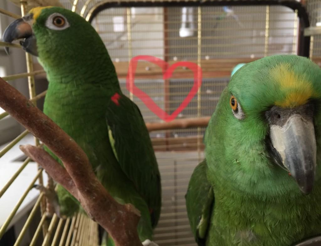 Joschi und Bio - ein glückliches Amazonenpaar