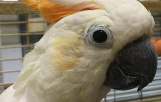 Augen auf beim Vogelkauf!