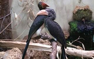 Lovemobiles leiser wegen eines Vogels