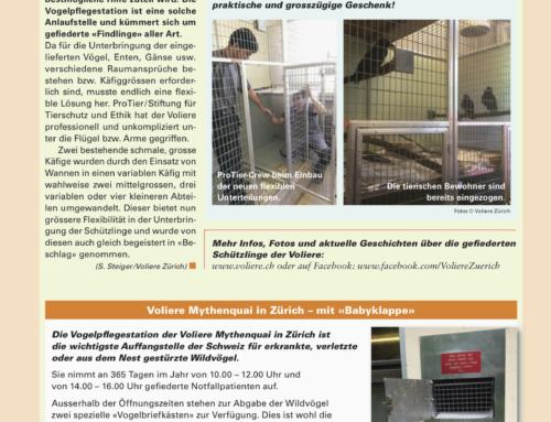 Voliere Mythenquai Zürich – ein Wunsch geht in Erfüllung